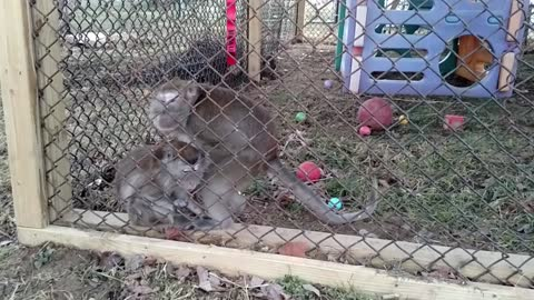 Monkey tries to FORCE love from another's hand