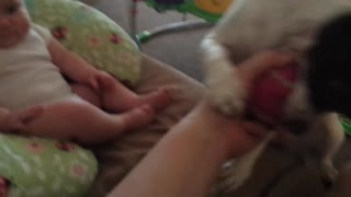 Baby playing with her dog