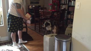 Boxer annoyed by singing Valentine's Day card - Video