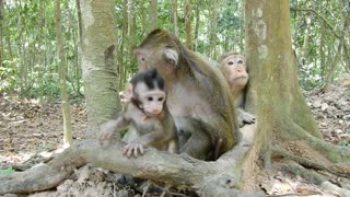 Cute Baby Monkey Love To Walk Around The Momi