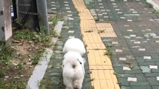 Walking DOgy Out Side