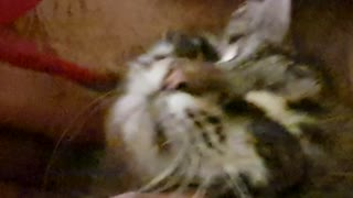 Dad makes funny Cat sounds while stroking our Cat