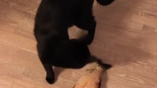 This cat is literally trying to kill a catnip fish