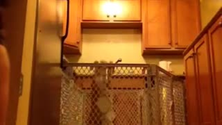 Dog jumping and getting out of its cage - Video