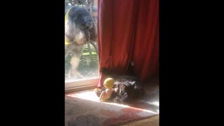 Cat Gets A Stern Look By A Dog Because It Is Playing With Its Toys