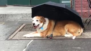 Dog outside coffeeshop with umbrella