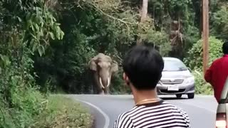Elephant and Car Solve a Stalemate