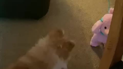 Who's this pink dog trying to take my place???