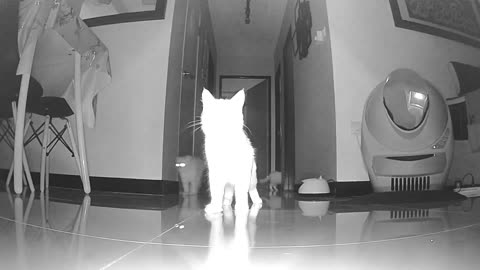 Pawranormal Activity (cats fights with ghost)