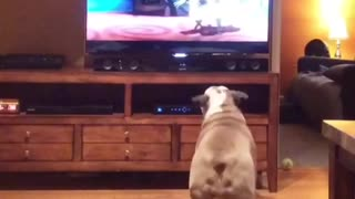 English Bulldog heavily invested in animated film - Video