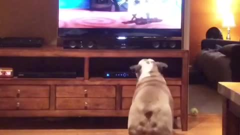 English Bulldog heavily invested in animated film
