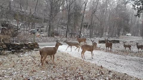 Hungry Deer on a Snowy Day - Part 1