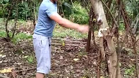 Tree Tumbles on Man as He Tries to Cut It Down