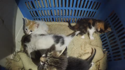 Gopro cam show a lair of five kittens