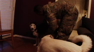 Husky dogs welcome soldier home from afghanistan - Video