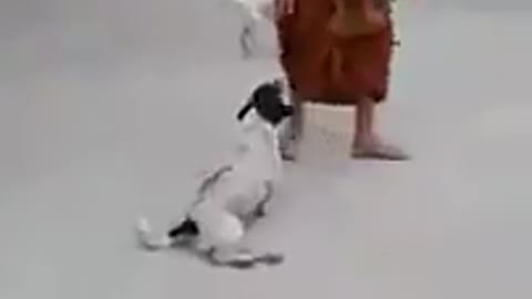 Awesome funny dog pretend as broken legs