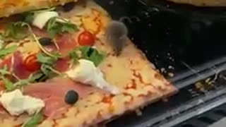 Mice party on pizza