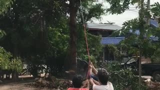 Tree Nearly Falls on Dogs