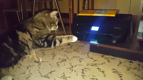 Cat Scares Itself While Attacking Printer