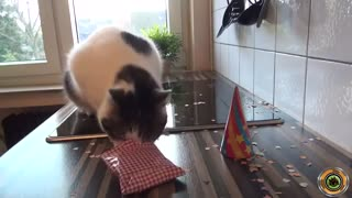 Funny cat birthday ^_^ - Video