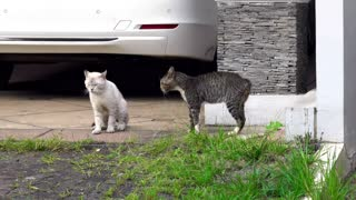 Fierce fighting between two cats, whichever you encourage