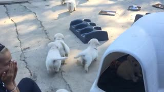 Puppies going after their mom