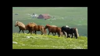 We Found Paradise On Earth, On This Island Has More Sweet Horses Than People! - Video