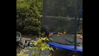 Rio the Leaping Lurcher Loves Her Trampoline