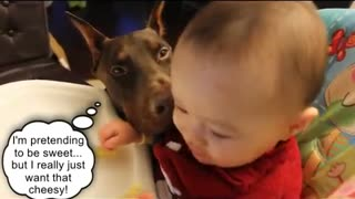 Sneaky dog steals food from baby