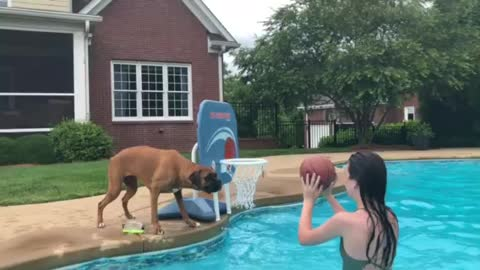 Blooper of Ball playing boxer