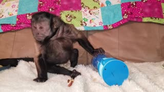 Monkey Learning to Operate a Bubblegum Machine  - Video