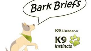 Bark Briefs - How to Help Your Dog Relax