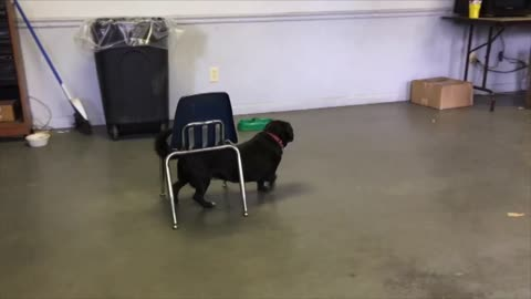 Cute Dog Is Smarter Than You Think
