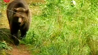 Baby Bears Find New Mom - Video