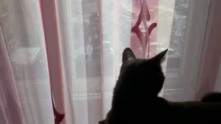 Interesting our cat - Video