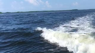 Wake Surfing Dolphins