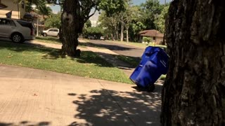 Girl Knocked Out During Trash Prank Gone Wrong - Video