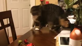 Cat gold ornament tail chase