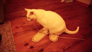 Cat knows the charm of slippers  - Video