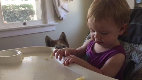 Baby loves to feed scraps to dog