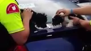 Two Dogs Rescued by Stranger from a Hot Car - Video