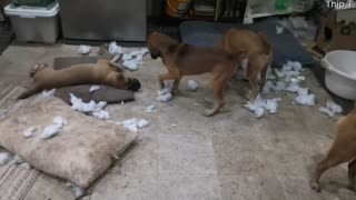 Happy Puppies Make a Mess