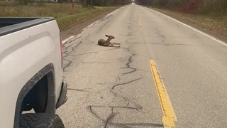 Clumsy Deer Knocks Herself Out