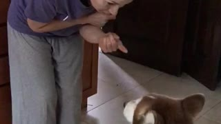 Husky refuses to be lectured after bad behavior