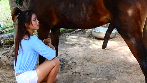 Amazing a girl and a horse at horse farm | Horse training| How To Teach Your Horse To Lay Down