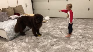 Little girl teaches dog how to play tag - Video