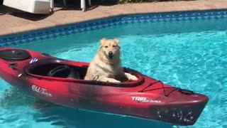Golden retriever red kayak pool - Video