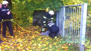 Deer Rescued by German Fire Brigade - Video