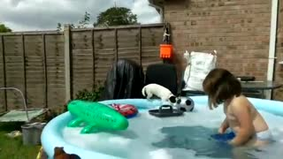 Epic fail dog trying to get ball out the pool