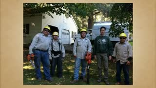 tree service redwood city - Video